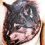 Angry wolf tattoo on a man's chest