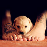 Ship tattoo on foot (+ cute puppy)
