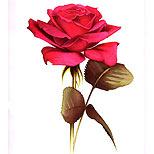 Realistic rose tattoo design