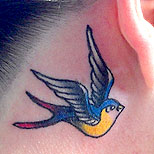 Traditional swallow tattoo behind a girl's ear