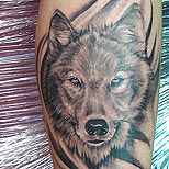 Wolf tattoo on arm
