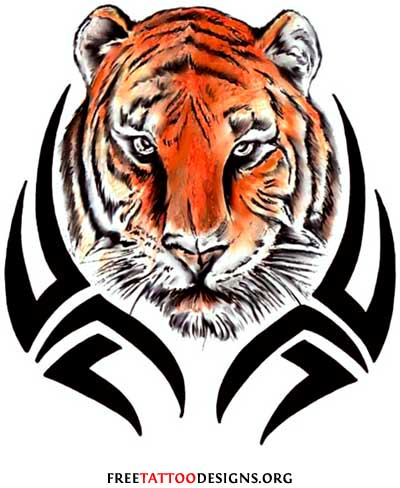 Tribal  Tattoo Designs on Tribal Tiger Tattoo